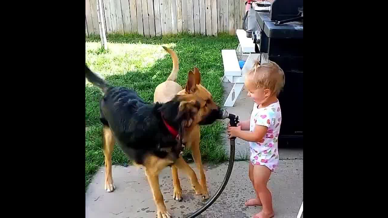 Cachorro e criança uma mistura mais do que perfeita