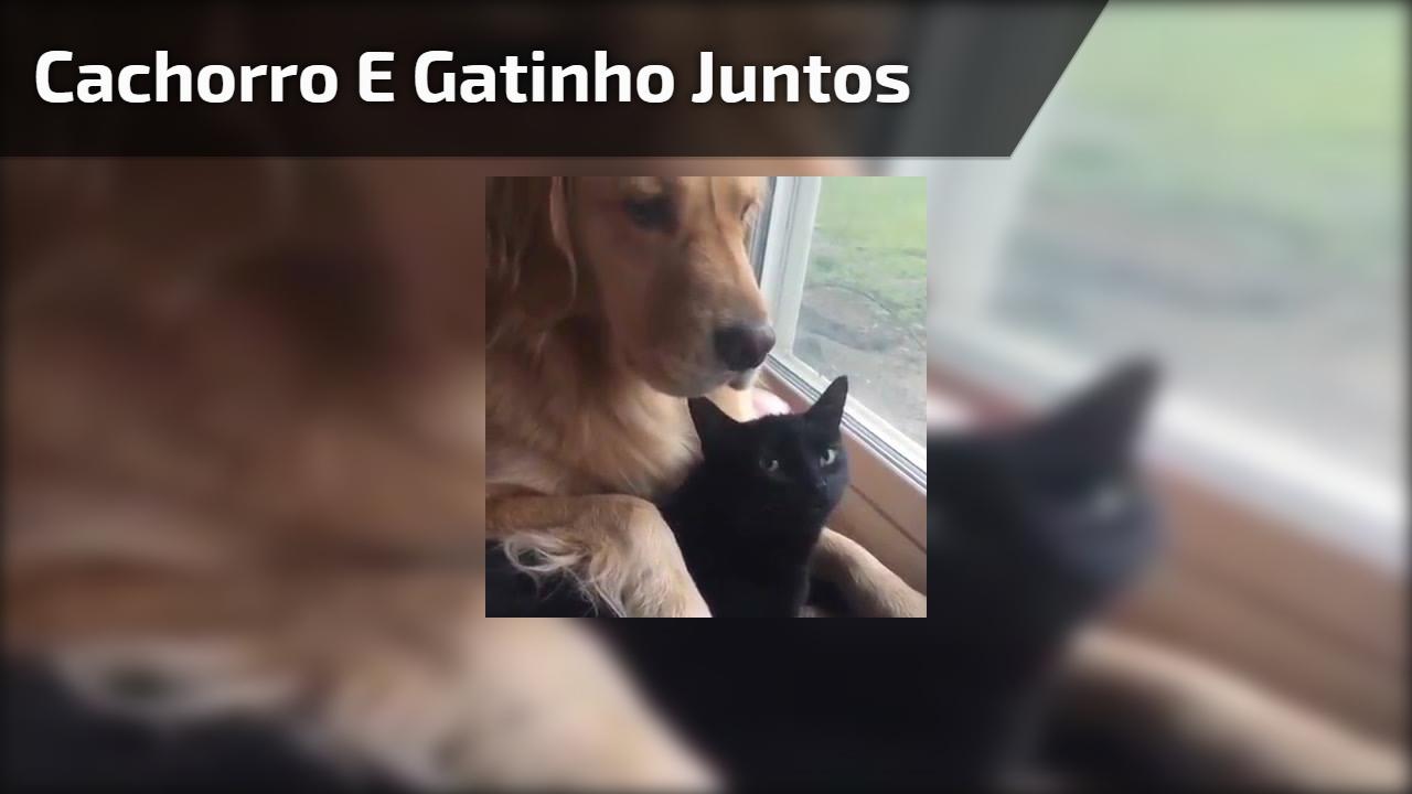Cachorro e gatinho amigos, olha só que coisinhas mais lindinhas!!!