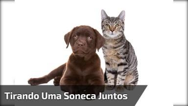 Cachorro E Gatinho Tirando Uma Soneca Juntos, Olha Só Que Amor!