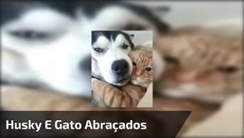 Cachorro E Gato Abraçadinhos, Eles São Umas Fofuras, Confira!