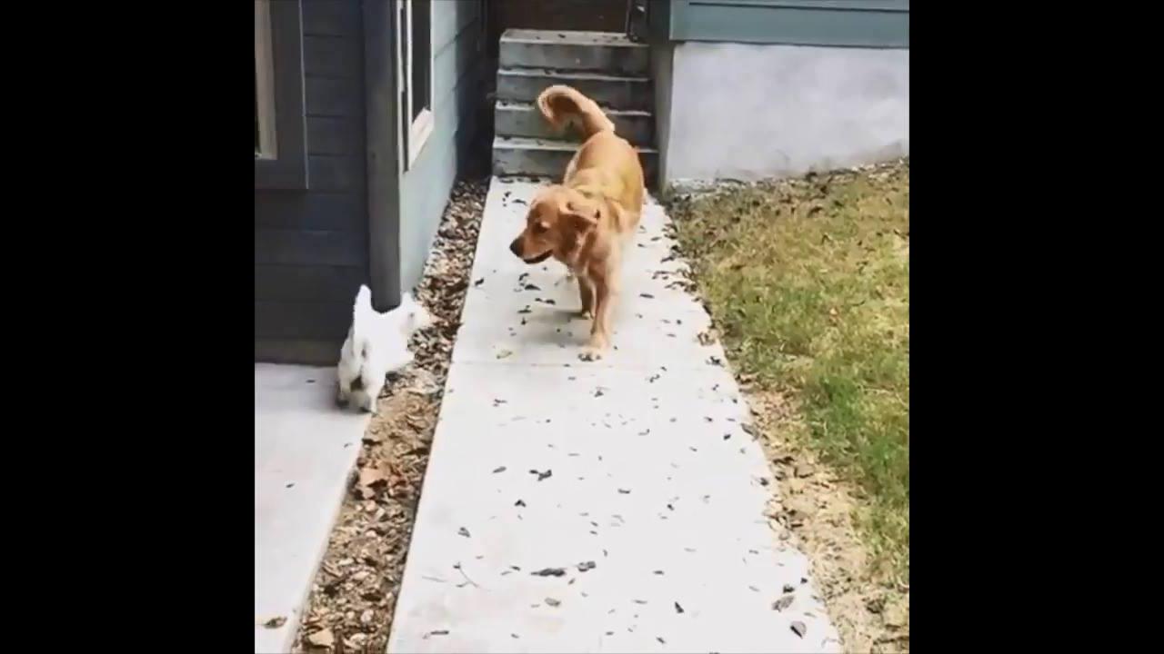 Cachorro e gato amigos, olha só quanto amor estre estes dois