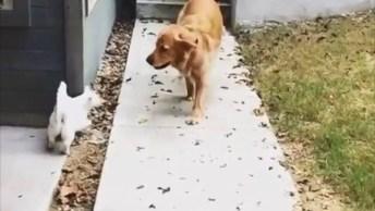 Cachorro E Gato Amigos, Olha Só Quanto Amor Estre Estes Dois!