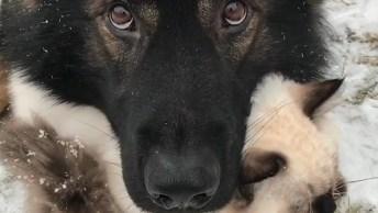 Cachorro E Gato Amizade Mais Fofa Que Você Verá Hoje, Que Lindos!