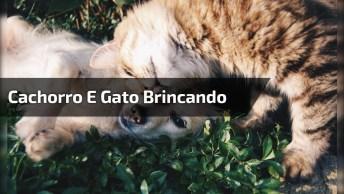 Cachorro E Gato Brincando De Forma Muito Fofa, Apaixonante!