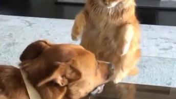 Cachorro E Gato Brincando, É Muito Engraçado O Convívio Entre Estes Dois Animais