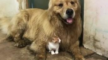 Cachorro E Gato Como Melhores Amigos, Ou Não, Espera Um Pouco. . .