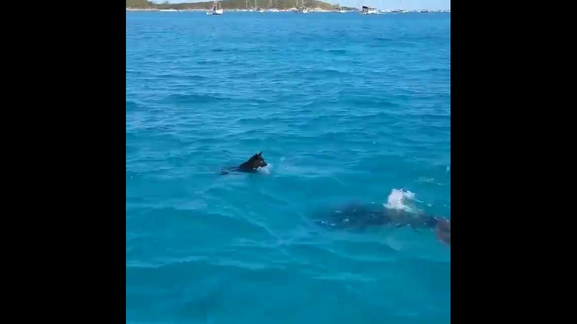 Cachorro e golfinho brincando em auto mar
