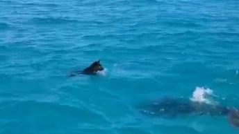 Cachorro E Golfinho Brincando Em Auto Mar, Que Imagens Incríveis!