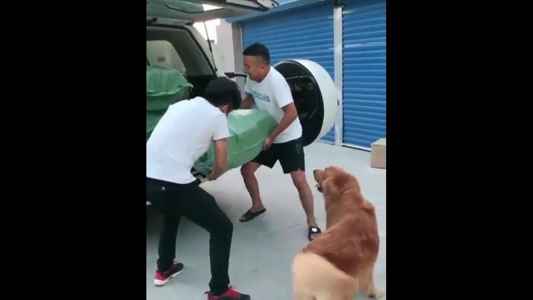 Cachorro é mais forte que dois homens juntos hahaha
