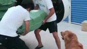 Cachorro É Mais Forte Que Dois Homens Juntos Hahaha, Veja Que Incrível!