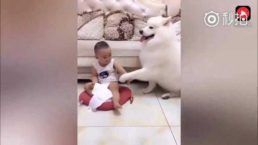 Cachorro e o bebê, eles são os melhores amigos um do outro
