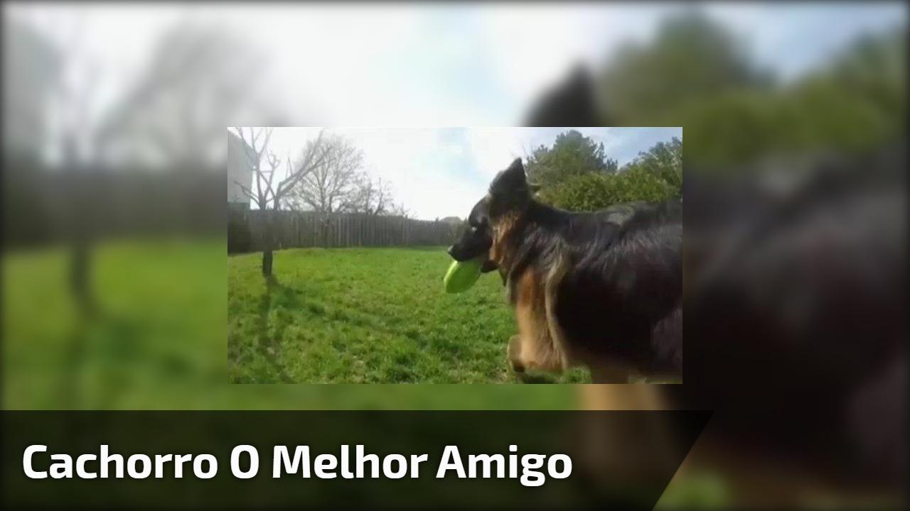 Cachorro é o melhor amigo do homem e do planeta, um video muito lindo!