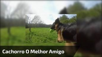 Cachorro É O Melhor Amigo Do Homem E Do Planeta, Um Vídeo Muito Lindo!