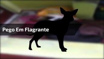 Cachorro É Pego Em Flagrante Comendo Ração Escondido, Olha A Cara De Pau!