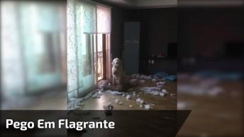 Cachorro É Pego Em Flagrante Fazendo Uma Bagunça Incrível, Confira!