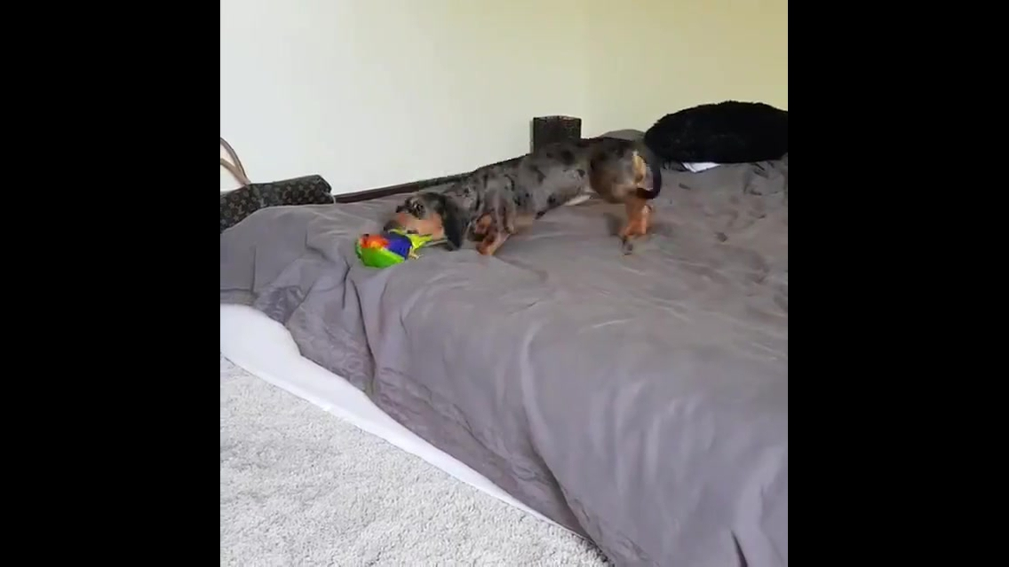 Cachorro e periquito super amiguinhos