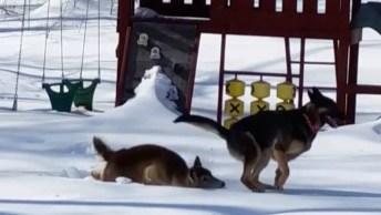 Cachorro E Servo Brincando - Por Essa Dupla Você Não Esperava!