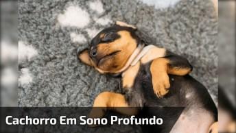 Cachorro Em Sono Profundo, Alguém Sabe Como Acordá-Lo?