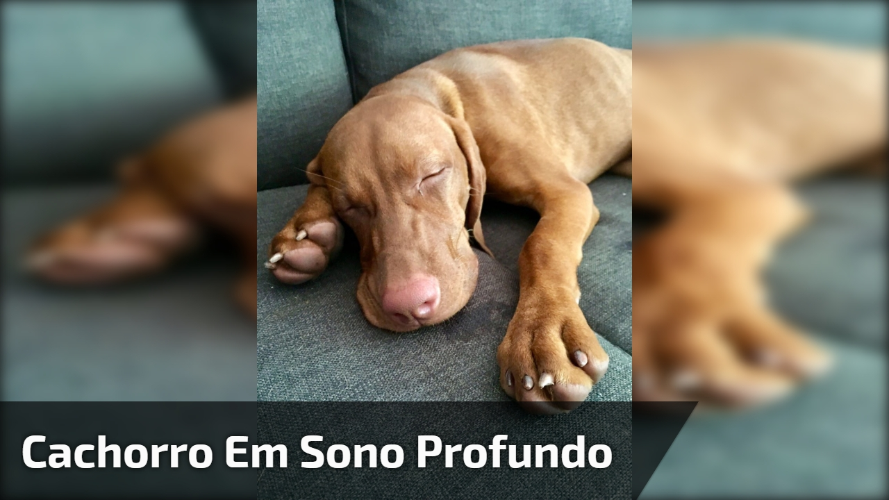 Cachorro em sono profundo