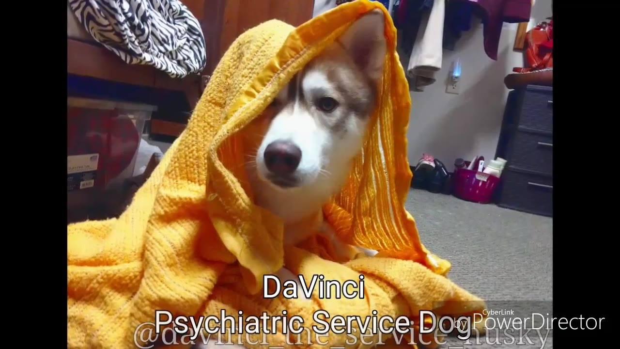 Cachorro em treinamento, veja como ele é inteligente