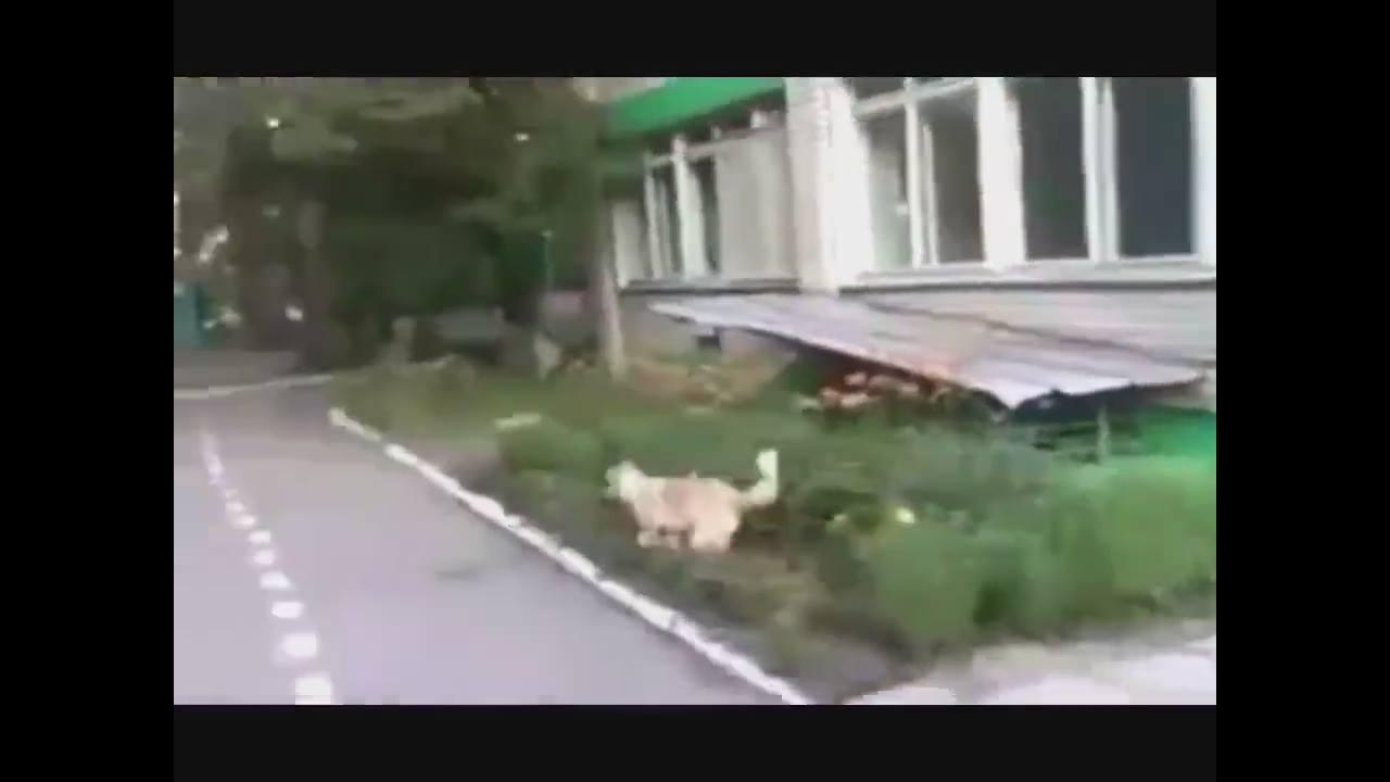 Cachorro encontra gatinho morto, só que não, kkk! Era só um disfarce do gato!!!