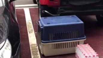 Cachorro Entra Da Caixa De Transporte E Acaba Caindo, Hahaha!