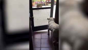 Cachorro Entra Em Casa E Esquece O Amiguinho La Fora, Veja Que Engraçadinho!