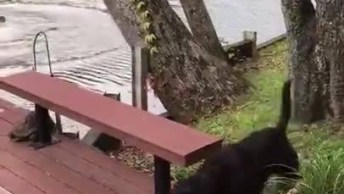 Cachorro Entra Em Desespero Ao Ver Seu Dono Pular Na Água!