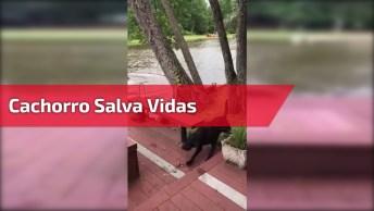 Cachorro Entra Em Desespero Quando Seu Dono Cai Na Água E Corre Para Salva-Lo!