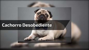 Cachorro Entra No Carro Da Dona E Não Quer Sair De Jeito Nenhum, Kkk!