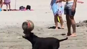 Cachorro Equilibra Bola Na Ponta Do Nariz, Ele Parou A Praia!