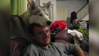 Cachorro Equilibrando A Cabeça No Humano, Para De Mexer Humano Hahaha!