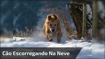 Cachorro Escorregando Na Neve, Ele Esta Muito Feliz, Confira!