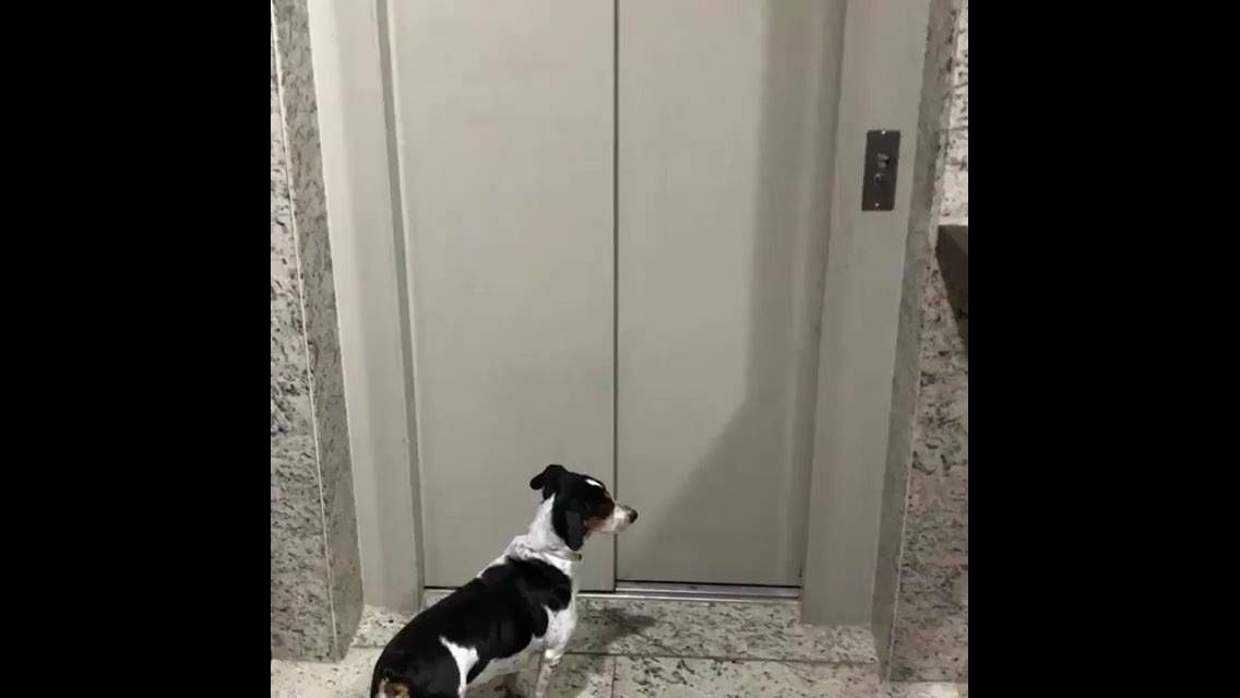 Cachorro esperando o elevador