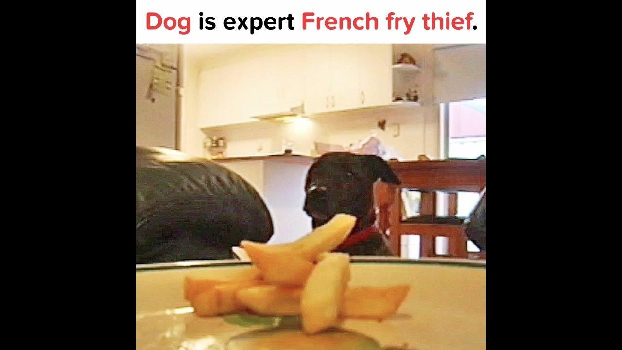 Cachorro esperto roubando comida sem que a dona perceba hahaha