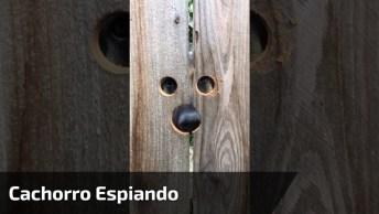 Cachorro Espiando Pela Cerca, Kkk! Olha Só Que Figurinha Engraçada!