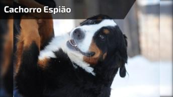 Cachorro Espiando Por Buraco Na Porta, Que Cena Inédita!