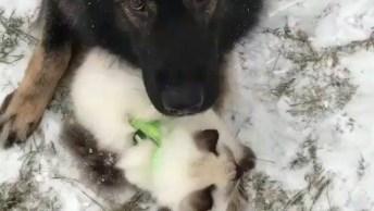 Cachorro Esquentando Gatinho Na Neve, Olha Só Que Lindinhos Estes Dois!