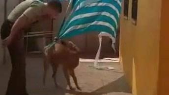 Cachorro Estava Em Apuros Tem Reação Incrível No Final Desse Vídeo, Confira!