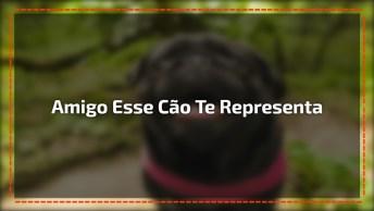 Cachorro Estranho, Para Compartilhar Com Os Amigos Estranhos Kkk!