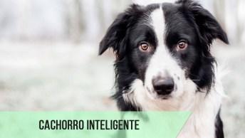 Cachorro Extremamente Inteligente! Da Só Uma Olhada Neste Vídeo!