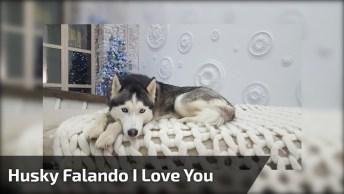 Cachorro Fala 'I Love You' Para Seus Donos, Ele É Muito Fofo!