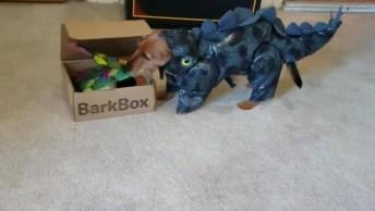 Cachorro Fantasiado De Dragão E Abrindo A Sua Caixa De Surpresas!