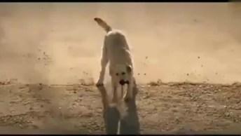 Cachorro Faz Algo Para Esse Homem Deficiente Que Poucos Humanos Fariam!