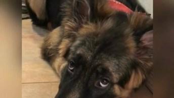 Cachorro Faz Arte E Fica Com Cara De Culpado, Tem Como Xingar?
