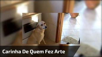 Cachorro Faz Arte E Fica Com Cara Feia Quando Leva Bronca, Kkk!