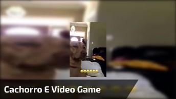 Cachorro Faz Cara Engraçada Enquanto Menina Joga Vídeo Game!