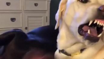 Cachorro Faz Cara Feia Para Carinho Do Amiguinho, Mais Não O Ataca, Hahaha!