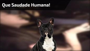 Cachorro Faz Escândalo Quando Sua Humana Entra No Carro, Veja A Folia!