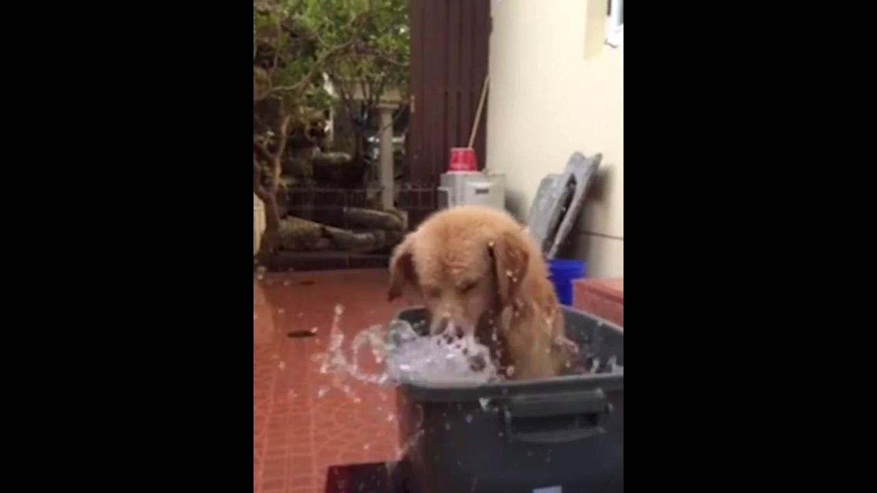 Cachorro fazendo a festa dentro de um balde cheio d água